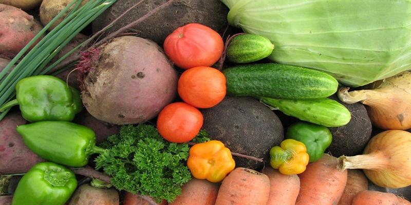 Бум тепличных овощей - Новости Рустехпром